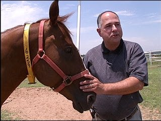 Horses recover from illegal racing tactics