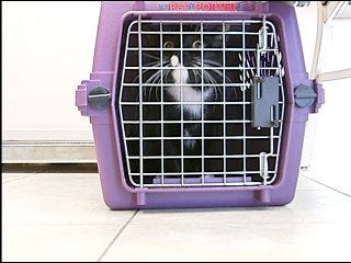SPOT Clinic offers cheap neutering, spaying operation