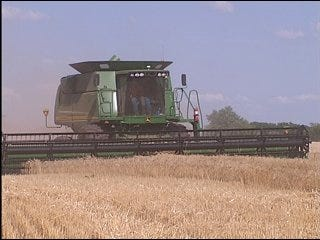 Wheat Farmers Hope For Dry Weather