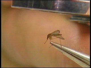 West Nile Virus threatens Oklahoma