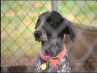 Fireworks spark fear in pets