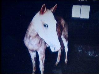 2 dozen horses reportedly starved