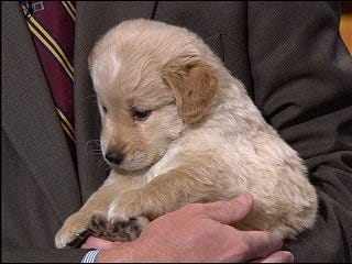 Oklahoma Humane Society hosts Doggy Derby
