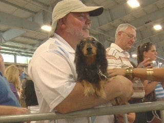 Dachshunds dash to support local charity