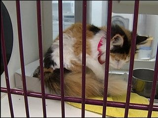 Cats overrun local shelters