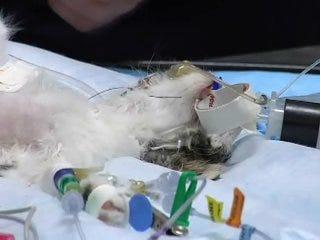 Surgery saves abandoned kitten's life