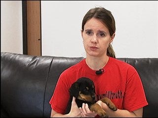 Groups rescue abandoned pets