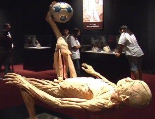 Exhibit reveals what lies beneath the skin