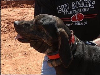 Guthrie police pursue charges against dog killer