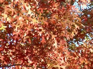 Autumn's Colorful Canopies of Oklahoma