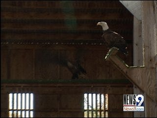 Eagle sanctuary looks to rebuild after storm