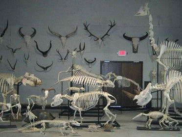 Meet the Bone Man