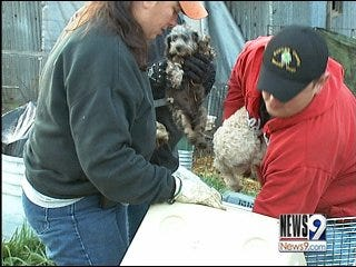 Over 100 dogs rescued from puppy mill