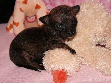 Small dog brings big hopes