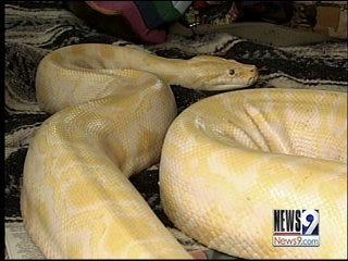Merlin the Python pulls disappearing act