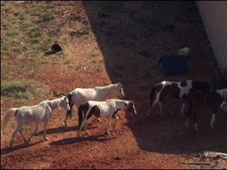 Malnourished horses seized for second time