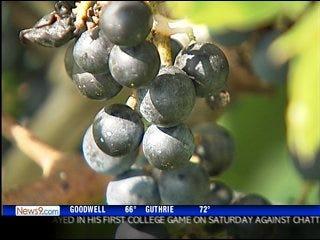 Metro community college offers vino degree