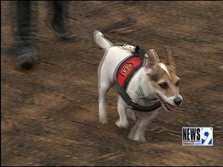 'Pet Detectives' Help Wildfire Victims