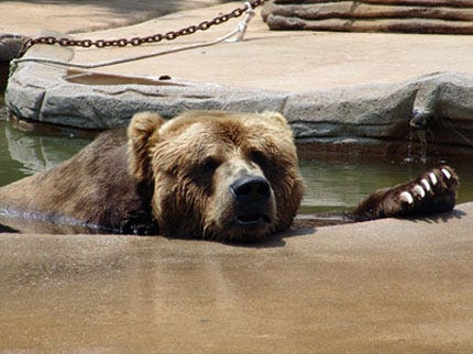Tulsa Zoo's Brown Bear Dies