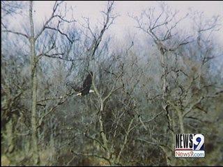 Tulsans Worried About Bald Eagles' Nest