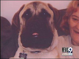 Teen Saves Child From Bullmastiff Attack