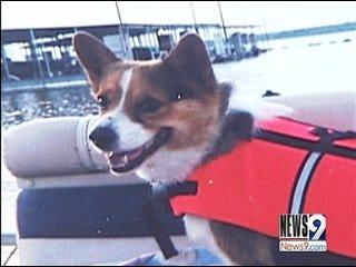 Possible Serial Dog Killer Targets Harrah Pets