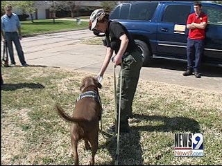 Pet Detectives Sniff Out Lost Loved Ones