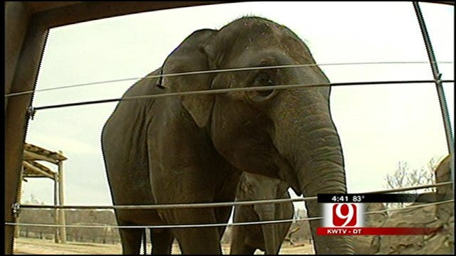 Oklahoma City Zoo Ready For Big Delivery