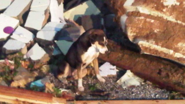Puppy Found Amid Tornado Destruction In Tushka