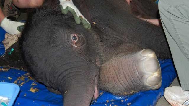 Asha The Elephant Gives Birth At OKC Zoo