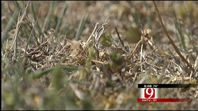 Oklahoma Yards Taking Beating From Dry, Windy Conditions