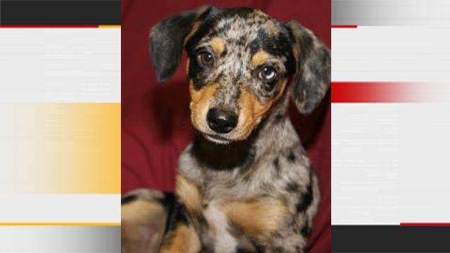 Edmond Animal Shelter To Open On Sunday