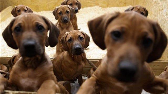 Edmond Animal Shelter To Open On Sundays