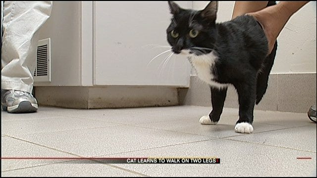 Injured Oklahoma City Cat Adapts To Life On Two Paws