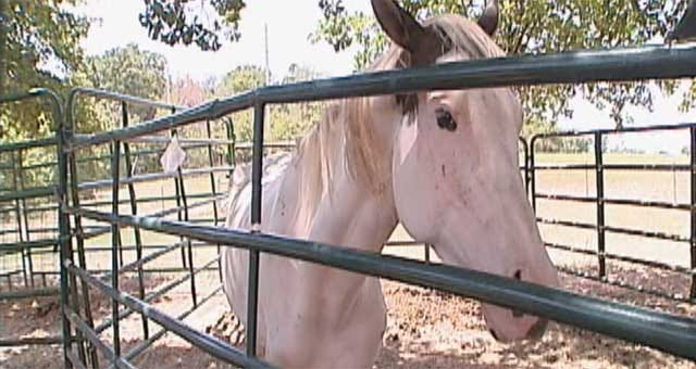 Starving Horses In Shawnee On Road To Recovery