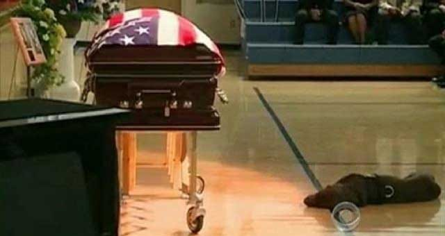 Fallen Iowa Soldier's Dog Mourns His Owner At Funeral