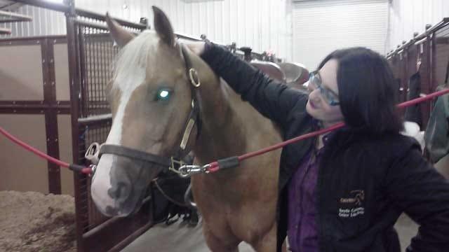Horse Proves Beneficial To 9/11 Survivor