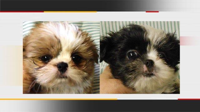 Deputies Seek Woman Who Sold Stolen Puppies In Norman