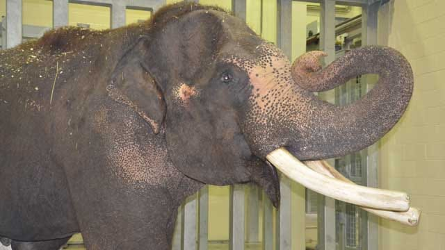 OKC Zoo Expands Its Elephant Herd To Four