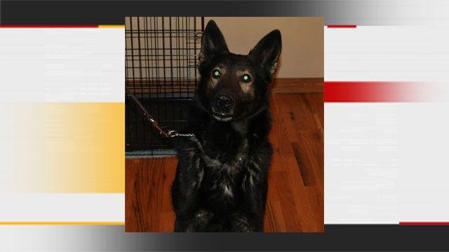 Moore Police Investigate Death Of K-9 Dog