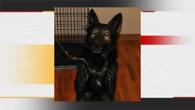 Moore Police: K-9 Found Dead May Have Been Hit By Car