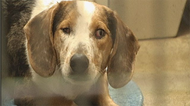 18 Dogs, 2 Cats Removed From OKC Animal Hoarding House