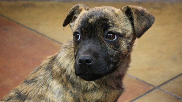 Puppy Found Sealed In Box, Tossed In Apartment Complex Dumpster