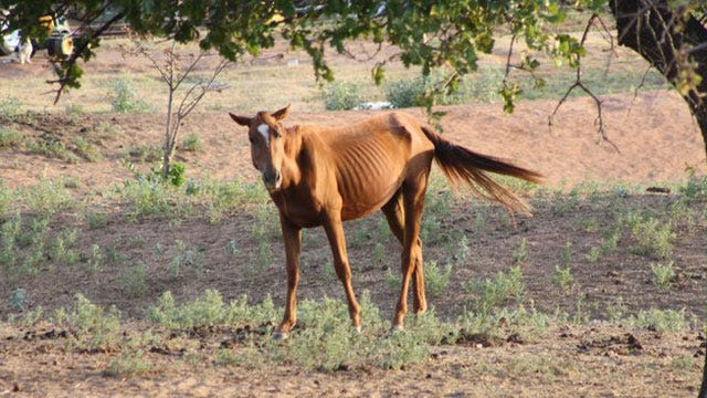 Facebook Draws Attention To Emaciated Oklahoma Horses