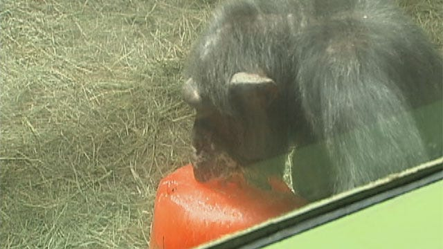OKC Zoo Helps Animals Cool Off