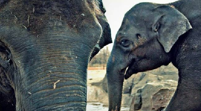 Dads Get In Free Sunday At Oklahoma City Zoo
