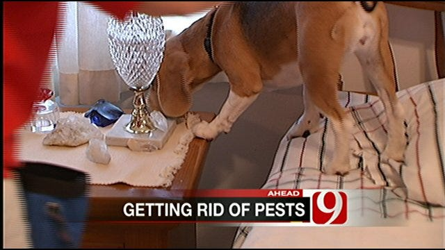 Norman K9 Sniffs Out Bed Bugs