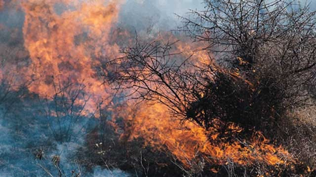 Extreme Drought Conditions Pose Wildfire Risk