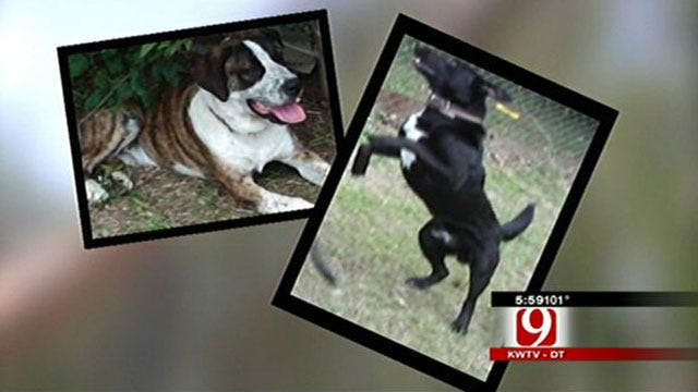 Police Report States Newcastle Dogs 'Killed With Shotgun'