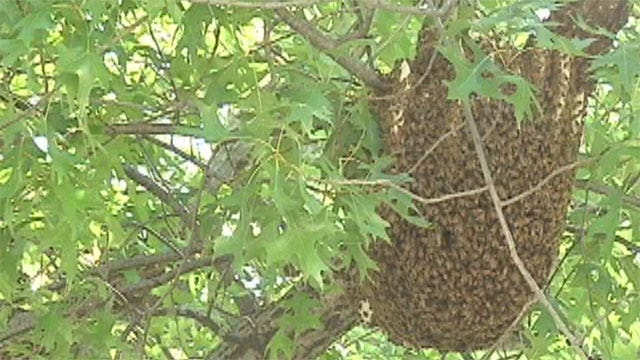 New Residents Create 'Buzz' in OKC Neighborhood